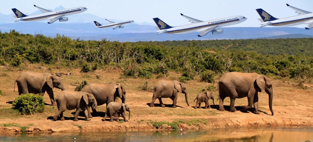 free-flights-safari