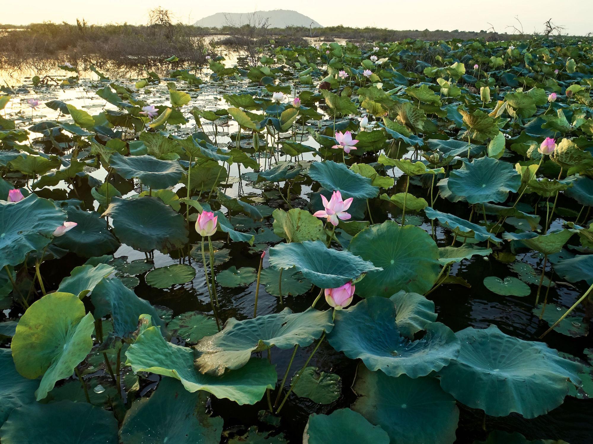 Cambodia_DJI_Drone_G2_0013
